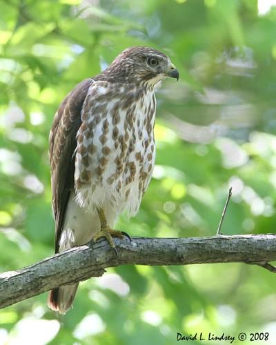 Wisconsin Quiz Birds