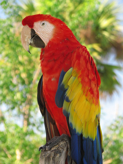 Colorful Tropical Bird At Lion Country Safari In Florida