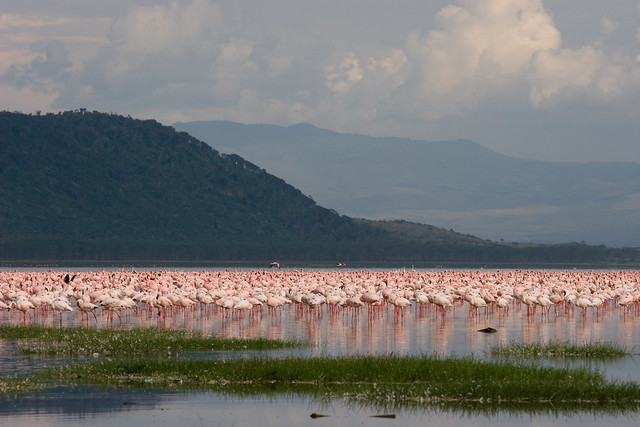 Parque Nacional del Lago Nakuru, Gran Valle del Rift, Kenia