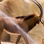 San Diego Zoo 061