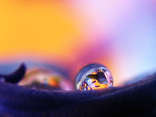 | صور رائعه على مقربه من قطرات المياه مناظر رائعه | 2441310577_886e6c9d20_z.jpg?zz=1