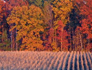Fall Crop