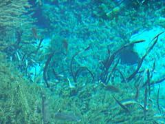 fish(0.0), coral reef(1.0), algae(1.0), coral(1.0), seaweed(1.0), marine biology(1.0), underwater(1.0), reef(1.0), kelp(1.0),
