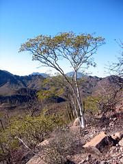Baja--2003