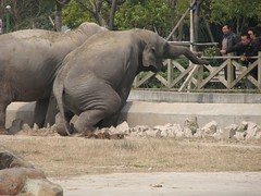 Take a tour of the biggest wildlife park in Shanghai- Shanghai Wild Animal Park - Things to do in Shanghai