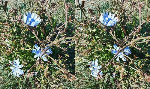 080901_Neuendorf_Flowers01_SbS