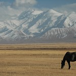 Horse Eating Below Mountains - Sary Tash, Kyrgyzstan