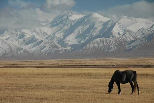 Horse Eating Below Mountains - Sary Tash, Kyrgyzstan