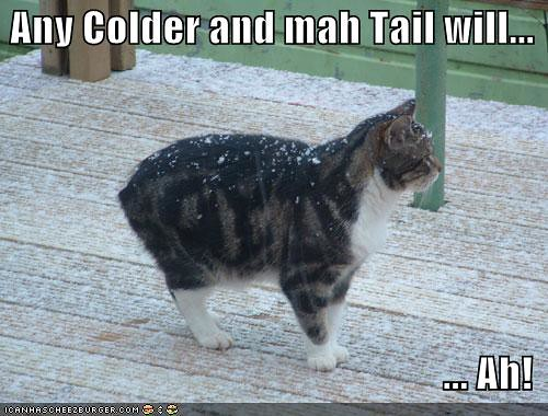 funny-pictures-cold-no-tail-cat