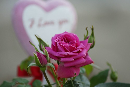 Who says love and roses must wait for Valentine's  Day??