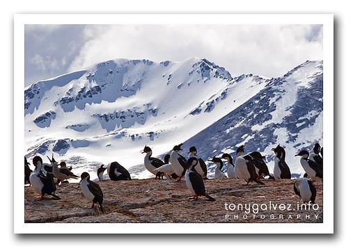 isla de los Lobos, Ushuaia