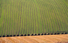 Sussex - scapes
