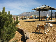 North Domingo Baca Dog Park, Albuquerque, NM