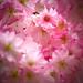 Spring 08-14 by elysiumcore