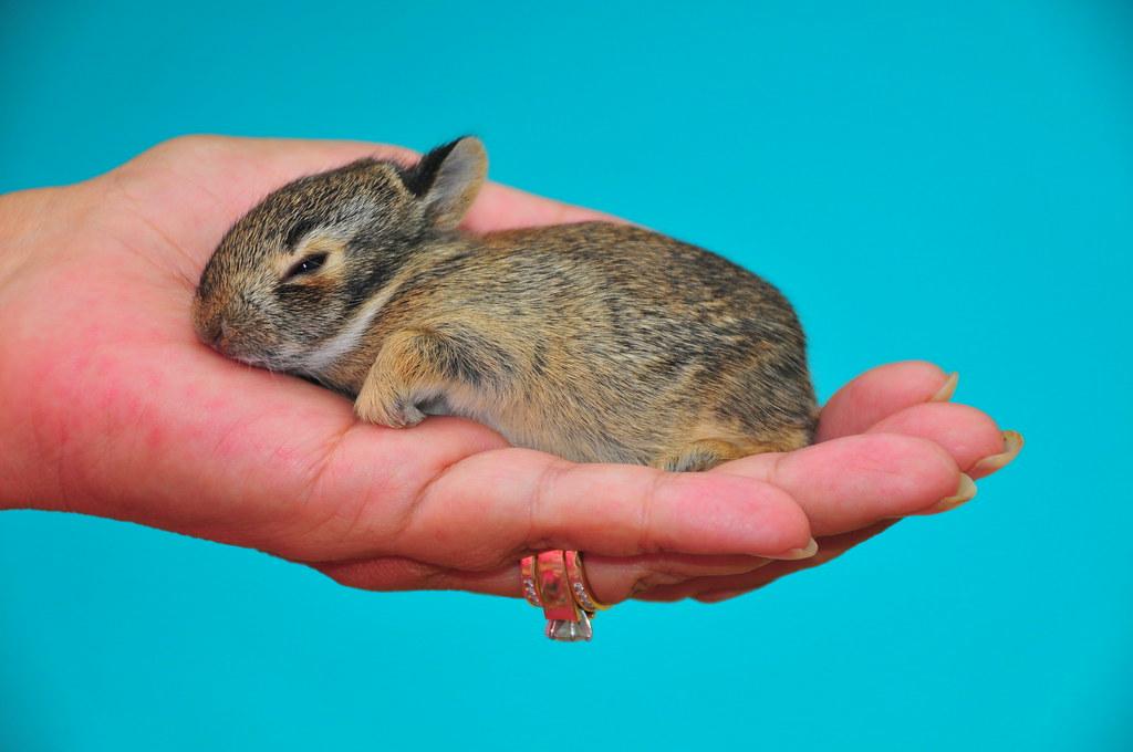 Wild newborn rabbits - photo#6