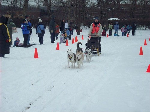 Dog Sled in Lisle, IL.