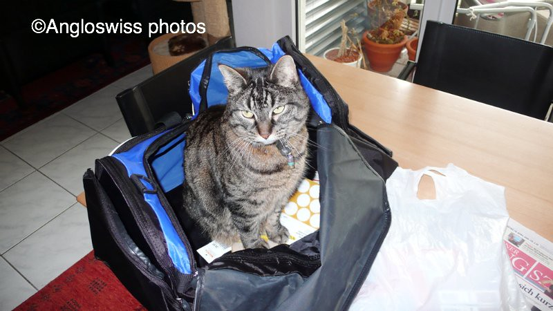 Tabby trying the new bag out