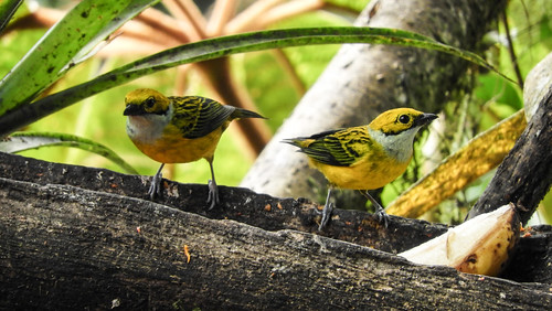 Colombia_BirdFair_2017_200