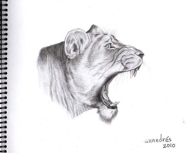 Dibujo realista de leona - Lioness realistic drawing