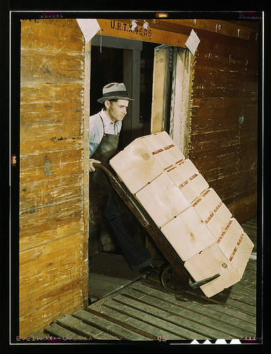 Loading oranges into refrigerator car at a co-op orange packing plant (LOC)