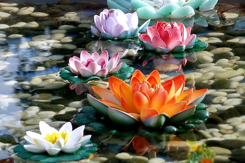 Flowers pictures gallery cool lotus flower photos images lotus flower photos image by jenniferphoon mightylinksfo