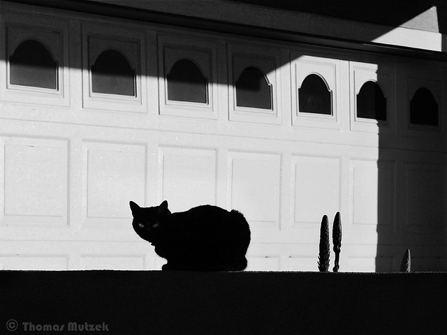 Cat, Pacifica, California