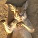 The Sleeping Kangaroo Series ~ ...zZzZzZzZzzz... by ~Vision ~A i r y ~