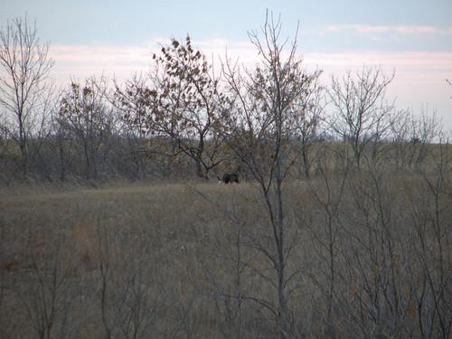 mountain canon missing north lion powershot link bobcat sawyer yeti dakota sasquatch s3is