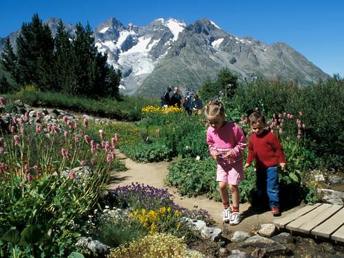 jardin botanique alpin Lautaret 32
