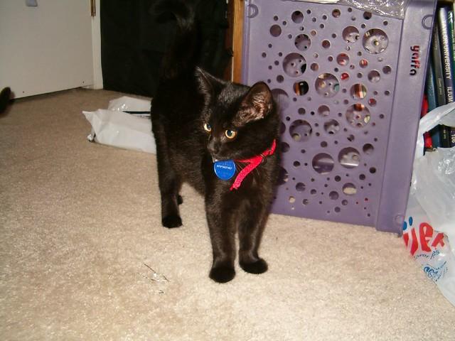 Ebony as a kitten