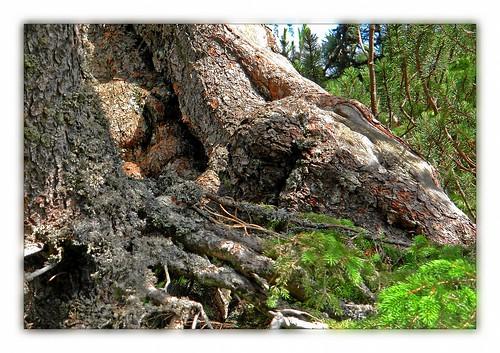 alps österreich green austria roots alpen hohetauern bösenstein scheibelsee edelrautehütte
