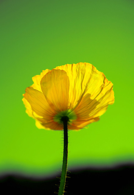Green against Yellow