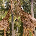San Diego Zoo 063