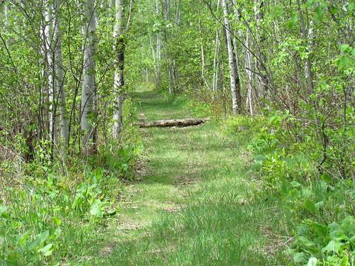woodland log path fallen