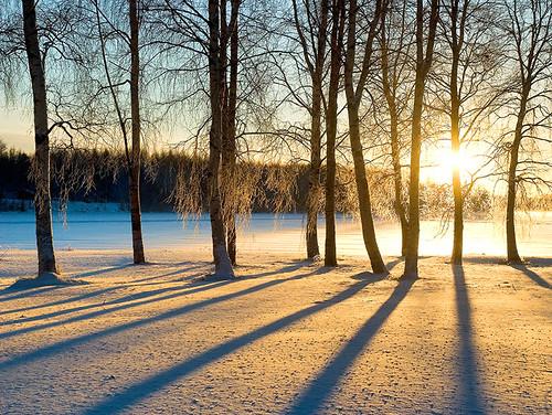 trees winter snow sunrise finland bravo searchthebest january lumi soe naturescall magicdonkey golddragon mywinners abigfave twtmeiconoftheday aplusphoto henribonell flickrplatinum infinestyle diamondclassphotographer theunforgettablepictures goldstaraward flickrestrellas