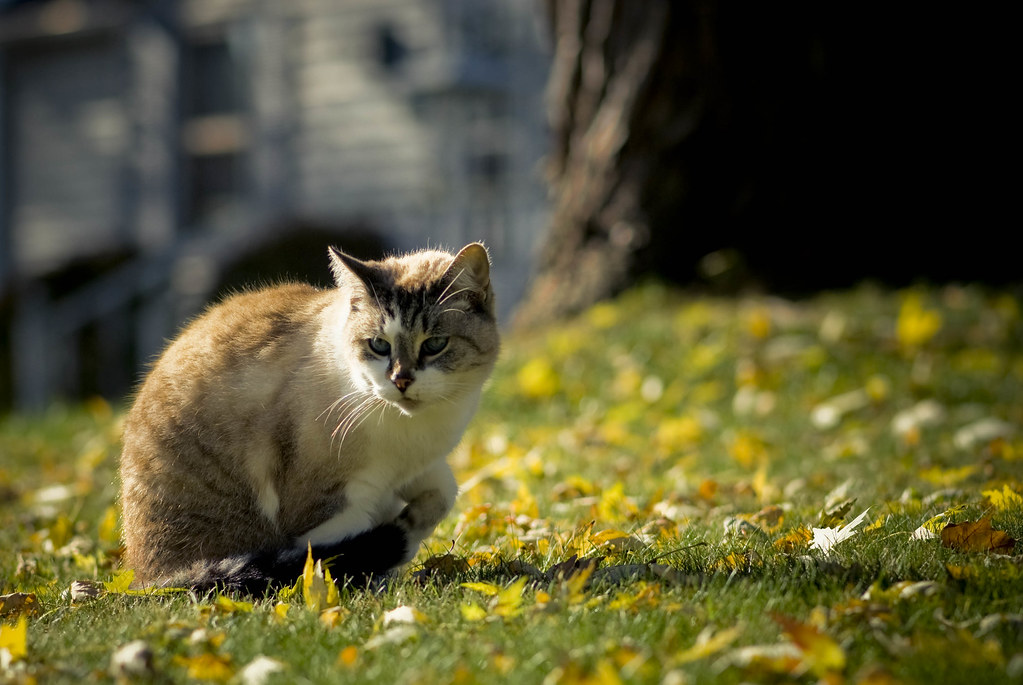 Watching Autumn by Brooke Pennington
