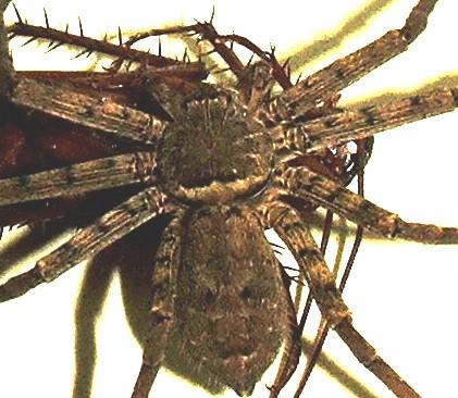 spider eats roach flickr photo