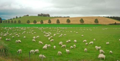 Mbeekkkkk Mbeeekkk oh Deer oh Sheeps