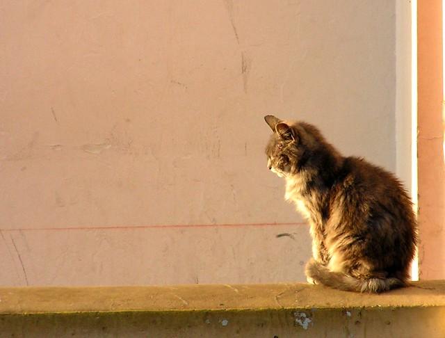 terremotos con gatos