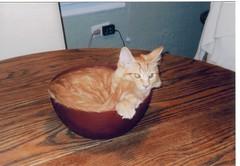 jasper in a bowl