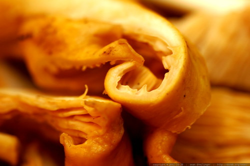Cantharellus (Chanterelle) mushrooms sliced for tonight's dinner  MG 5555