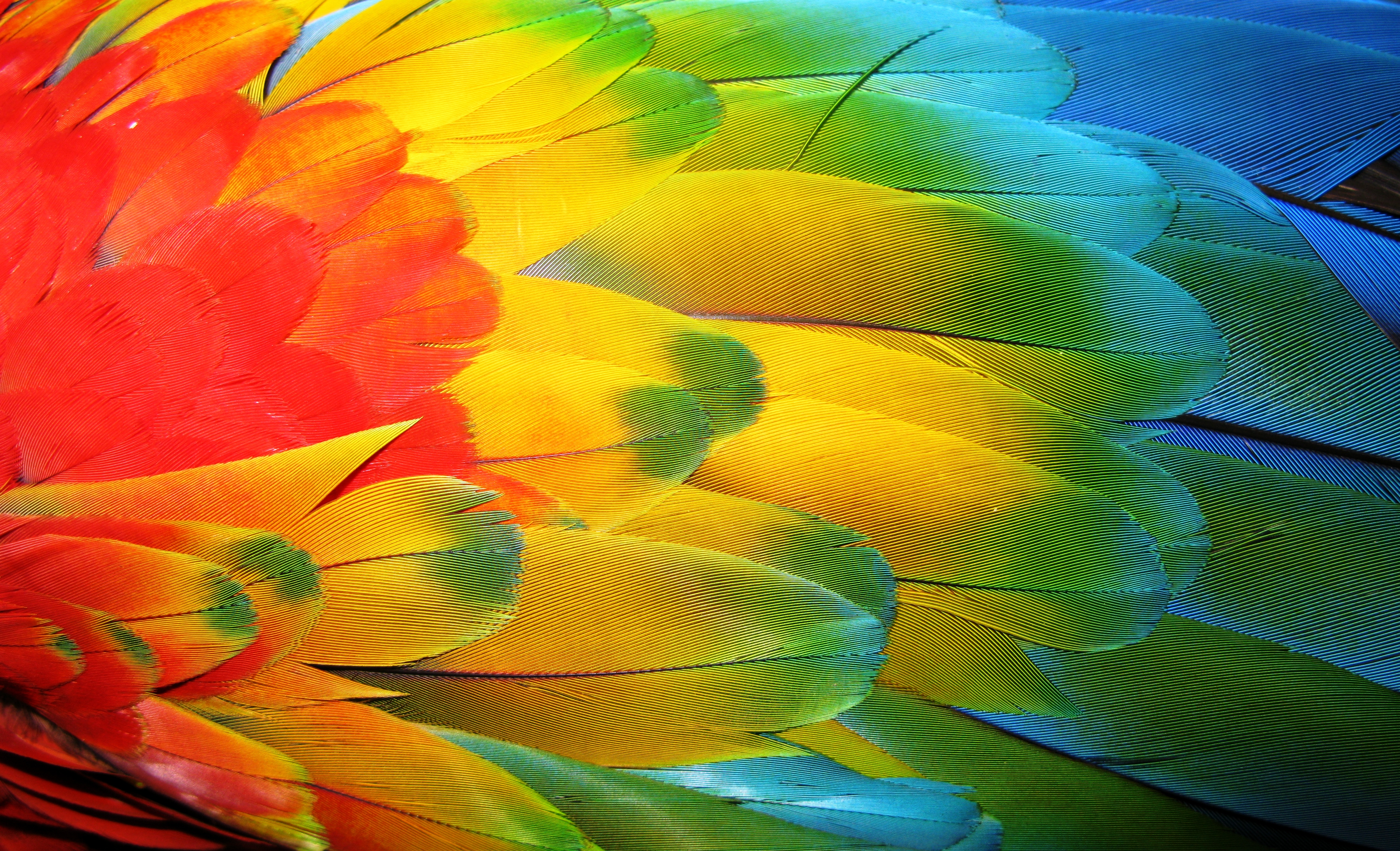 Parrot feathers - photo#19