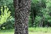 Tree, f/16.0