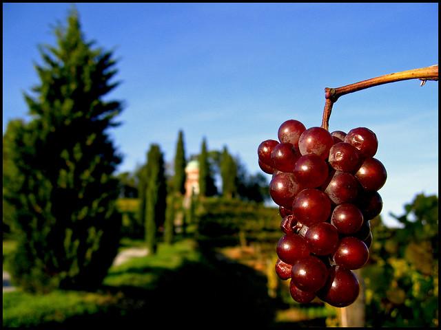 I paesaggi vitivinicoli di Langhe-Roero e Monferrato sono
