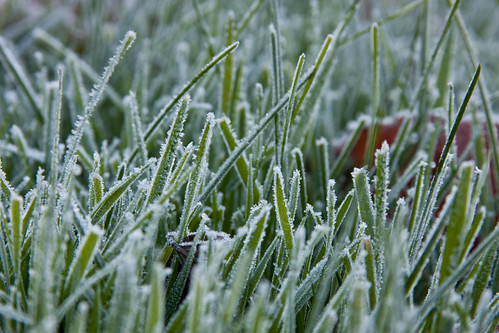 morning november wallpaper usa ny grass frost myfav rochester pittsford 2007 canon40d randomshotsfrost
