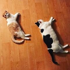 Babycat. Bigcat.