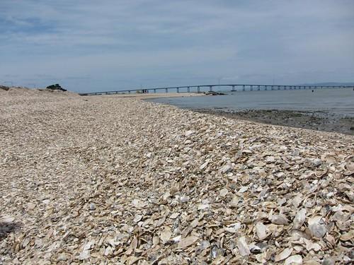 Shell Beach IMG_5927
