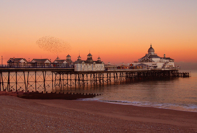 Eastbourne pier & starlings