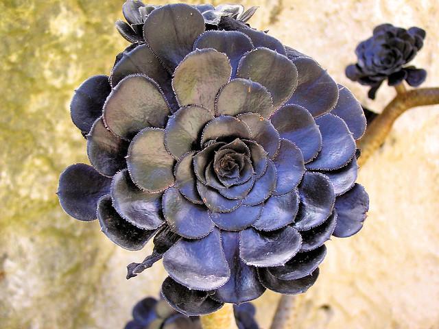 black exotic garden the jardin exotique de monaco is a. Black Bedroom Furniture Sets. Home Design Ideas