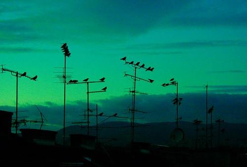 city travel roof sunset sky green bird silhouette evening interestingness europe citylife croatia aerial story zagreb cinematic 2007 travelpix interestingness3 i500 canon400d